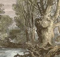 Engraving of the New Forest